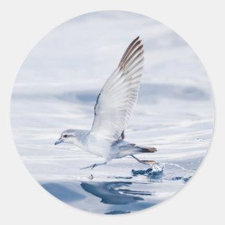 Fairy Prion Pachyptila Turtur Sea Bird Running Round Stickers