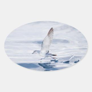 Fairy Prion Pachyptila Turtur Sea Bird Running Oval Sticker
