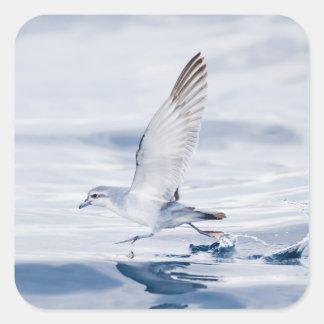 Fairy Prion Pachyptila Turtur Sea Bird Running Sticker