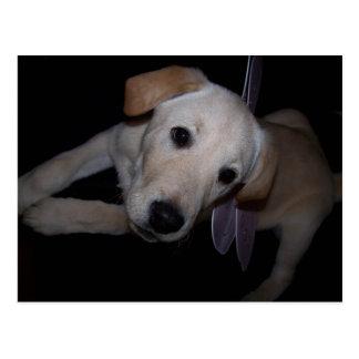 fairy pup postcard