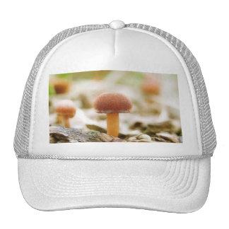 Fairy Ring Mushrooms Trucker Hat