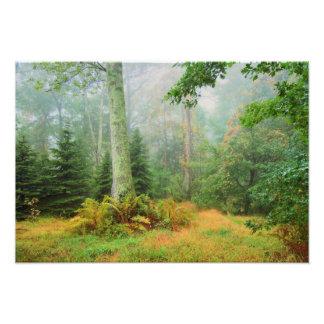 Fairy tale woods photo print