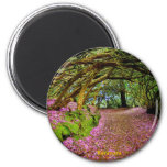 Fairy Tunnel, Kenmare Magnets