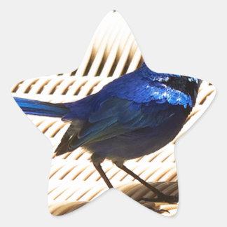 Fairy Wren Star Sticker
