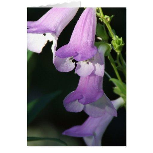FairyBelles Card