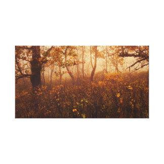 Fairyland Canvas Prints