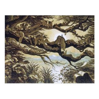 Fairyland: Dormido en el claro de luna Postal