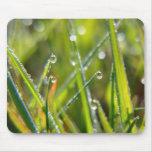 Fairyland ~ Macro Grass & Dew Drops Abstract Mousepad
