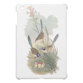 Fairywren Púrpura-coronado