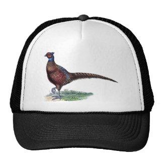Faisán colorido del vintage gorra