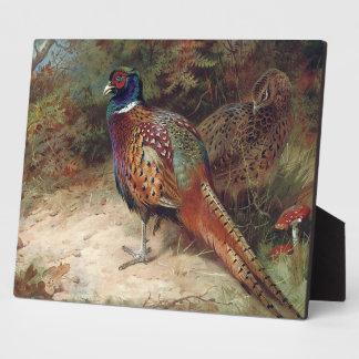 Faisán del gallo y de la gallina placas con fotos
