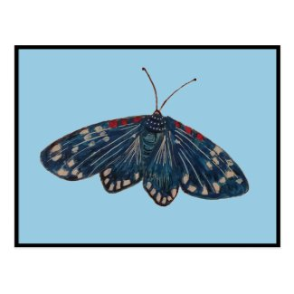 Faithful Beautiful Blue Moth Art Postcard