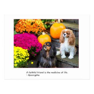 Faithful Friend Cavalier King Charles Postcard