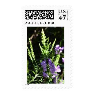 Fake Foxglove Stamp
