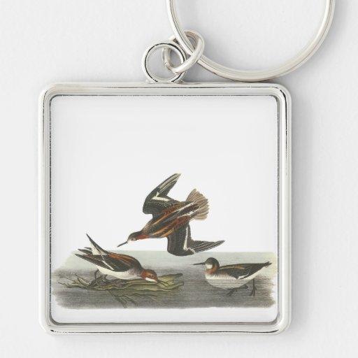 Falaropo de cuello rojo, Juan Audubon Llavero Cuadrado Plateado