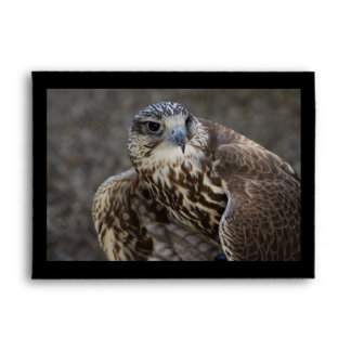 Falco cherrug envelope