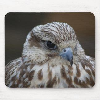 Falco cherrug Portrait Mouse Pads