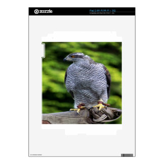 Falcon bird nature design decal for iPad 2