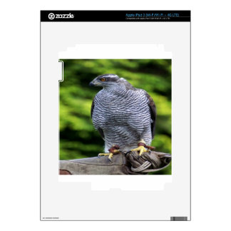 Falcon bird nature design decals for iPad 3