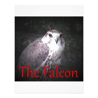 Falcon, bird of prey , wildlife,  nature,  photo letterhead