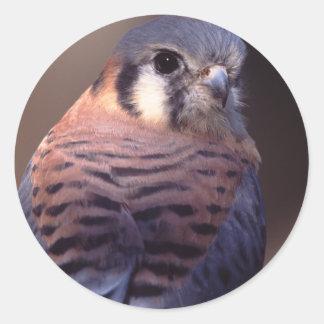 falcon classic round sticker