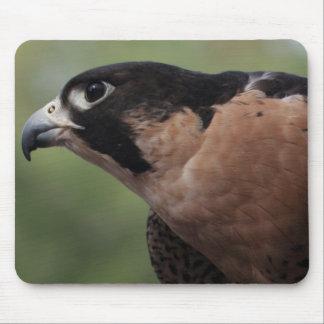 Falcon Eye Mousepad