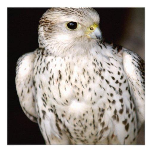 Falcon Invites