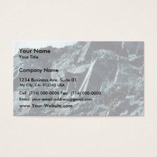 Falcon Nest Business Card