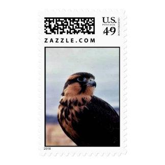 Falcon, northern aplomado (B06V) Stamp