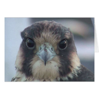 Falcon notecard stationery note card
