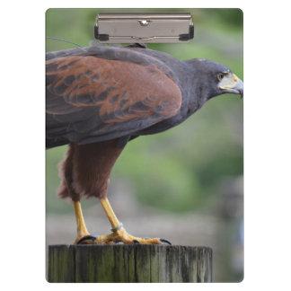 falcon on post raptor bird image clipboards