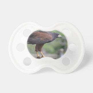 falcon on post raptor bird image pacifier