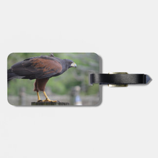 falcon on post raptor bird image tag for luggage