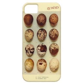 Falcon & Sparrowhawk's eggs iPhone SE/5/5s Case