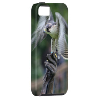 Falconry iPhone SE/5/5s Case