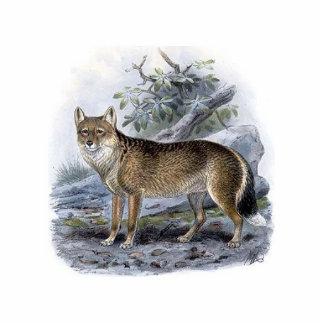 Falkland Island Fox Acrylic Cut Out