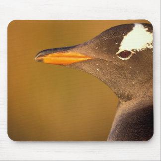 Falkland Islands. Gentoo Penguins. (Pyroscelis Mouse Pad