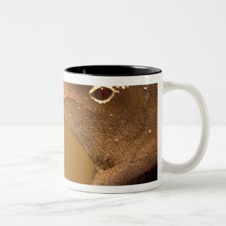 Falkland Islands. Gentoo Penguins. (Pyroscelis Two-Tone Coffee Mug