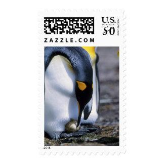 Falkland Islands. King penguin tends single egg. Postage