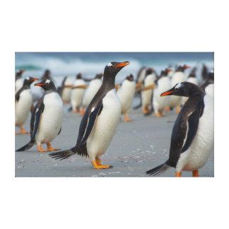 Falkland Islands. Saunders Island. Gentoo 2 Canvas Print