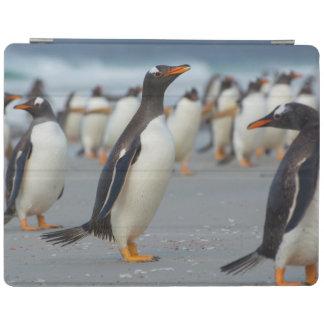 Falkland Islands. Saunders Island. Gentoo 2 iPad Cover