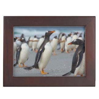 Falkland Islands. Saunders Island. Gentoo 2 Memory Box