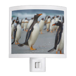Falkland Islands. Saunders Island. Gentoo 2 Night Light
