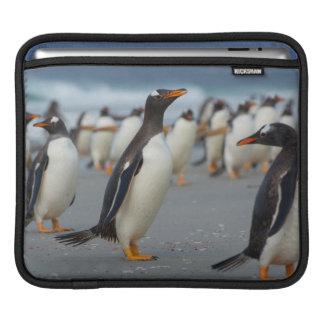 Falkland Islands. Saunders Island. Gentoo 2 Sleeves For iPads