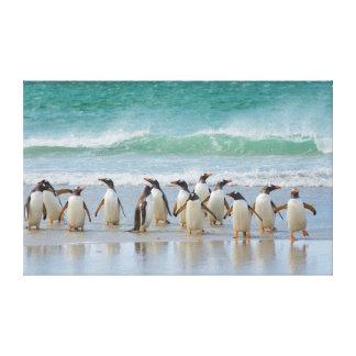 Falkland Islands. Saunders Island. Gentoo 5 Canvas Print