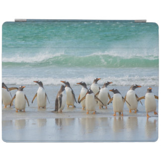 Falkland Islands. Saunders Island. Gentoo 5 iPad Cover