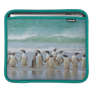 Falkland Islands. Saunders Island. Gentoo 5 iPad Sleeve