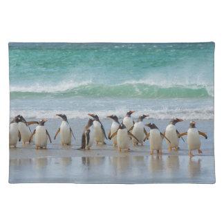 Falkland Islands. Saunders Island. Gentoo 5 Placemat
