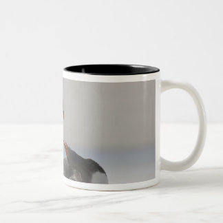 Falkland Islands, Saunders Island. Gentoo Two-Tone Coffee Mug