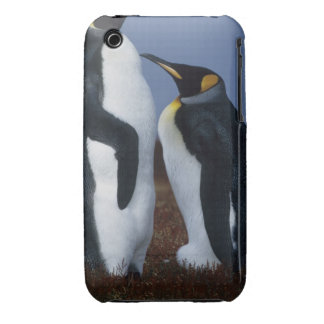 Falkland Islands Two king penguins stand in iPhone 3 Cover
